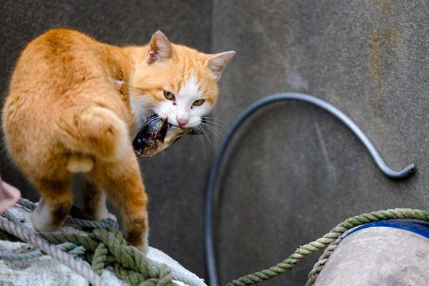 Gato é fotografado após vencer disputa e abocanhar peixe (Foto: Thomas Peter/Reuters)