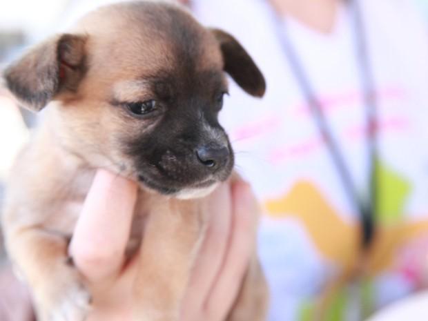 Animais foram castrados e receberam microchipagem em Itaúna (Foto: Prefeitura de Itaúna/Divulgação)