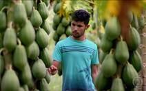 Qualificação para jovens agricultores