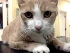 Gato é salvo após receber transfusão de sangue de cão nos EUA