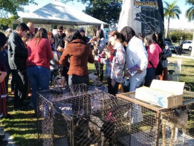 Para quem ainda não tem o seu cãozinho, tem a feira de adoção (Foto: Mariana Bonora/G1)