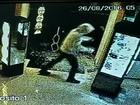 Três homens são presos suspeitos de furtarem lojas no centro de Avaré
