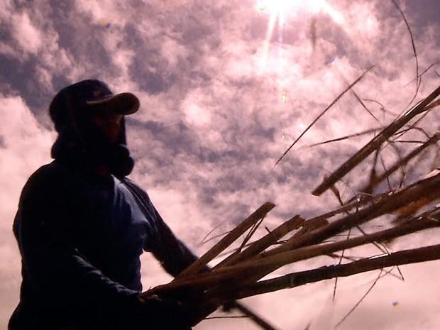 Aumento de contratações no setor industrial neste período se deve ao preparo para a safra da cana-de-açúcar, diz sindicato (Foto: Reprodução/TV Cabo Branco)