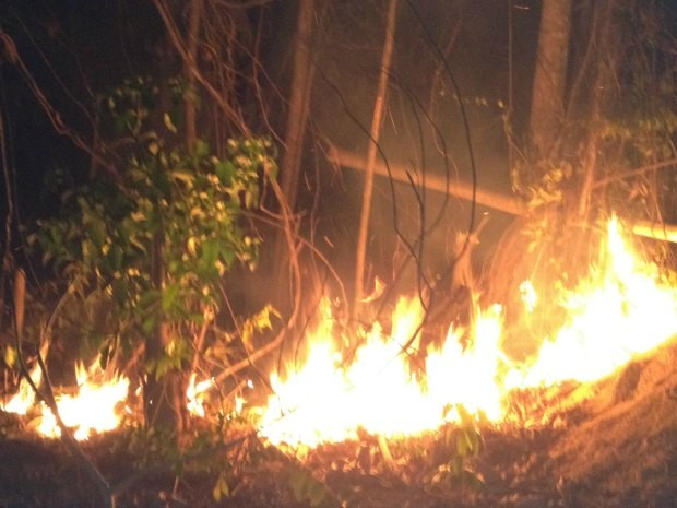 Rompimento de fio de energia causa incêndio na Zona Rural em Porto Velho (Foto: Ivanete Damasceno/G1)