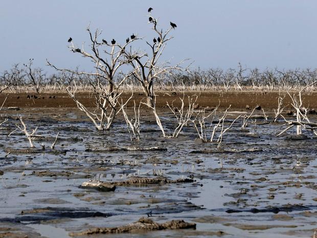 Corvos são vistos em ramos de árvores entre lama do rio, que está enfrentando pior seca em quase duas décadas (Foto: Jorge Adorno/Reuters)