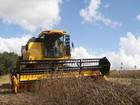 'Copie e Cobre' as propostas de Beto Richa para o setor agrícola