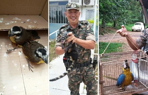 PM resgata animais silvestres na zona urbana de 3 cidades do sul de Goiás (Foto: Divulgação/PM)