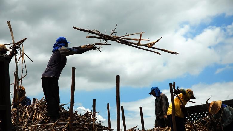 agricultura_cana_trabalhadores' (Foto: Editora Globo)