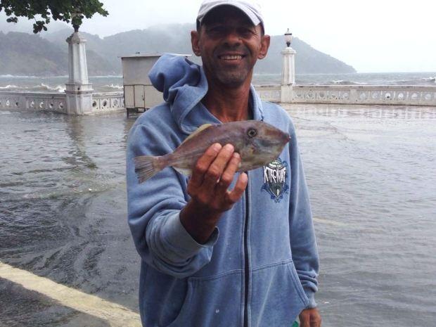 Peixe foi encontrado em prédio de Santos após ressaca (Foto: Arquivo Pessoal)