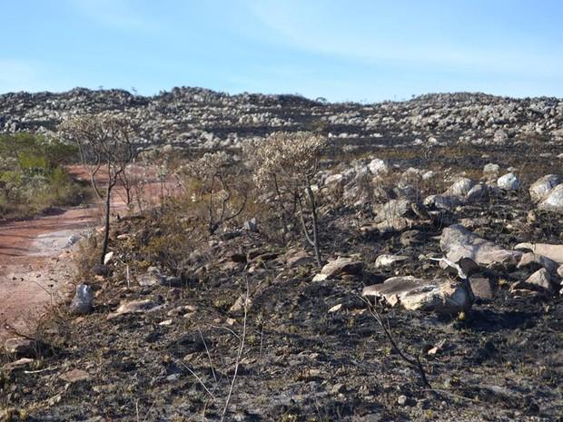 Estiagem e queimadas mudaram cenário do Parque (Foto: Anna Lúcia Tavares/ G1)