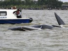 Curiosos atrapalham resgate de baleia em praia da Indonésia