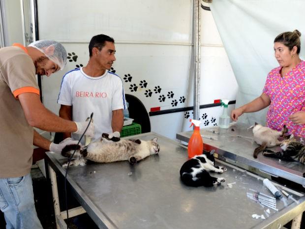 Mutirão visa reduzir a população de animais abandonados e prevenir doenças (Foto: Zaqueu Proença)