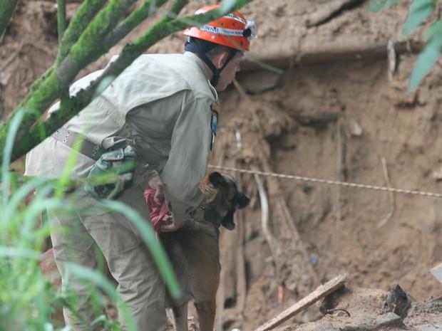 Cães farejadores auxiliaram nas buscas pelos desaparecidos (Foto: Felipe Carvalho)