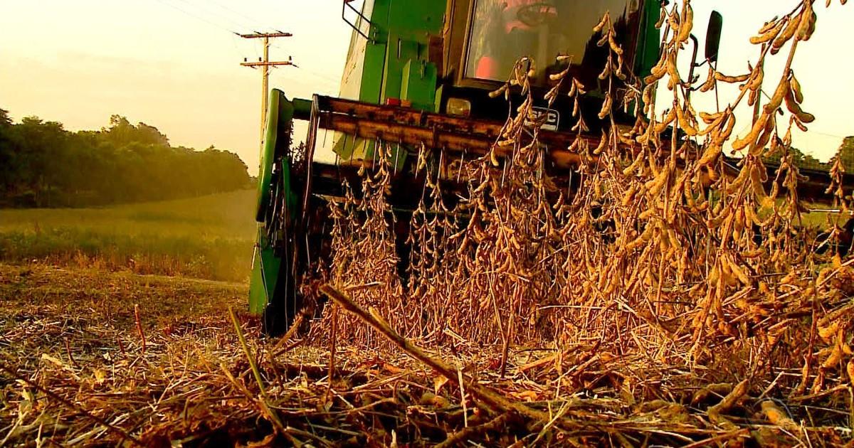 RS projeta faturamento de R$ 19,3 bilhões com safra de soja