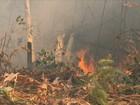 Queimadas se espalham e destroem plantações em propriedades de RR