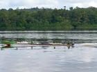 Doenças tropicais são monitoradas na fronteira entre AP e Guiana Francesa