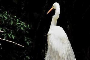 Aves são fotografadas em parques (Vanessa Leonel)