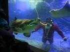Mergulhador fantasiado de Papai Noel nada com tubarão em Ubatuba, SP