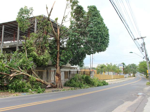 Árvore na Rua José Romão, bairro Novo Aleixo (Foto: Suelen Gonçalves/G1 AM)