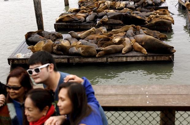 Moradores e turistas aproveitaram para tirar fotos ou mesmo selfies com os leões-marinhos ao fundo (Foto: Robert Galbraith/Reuters)