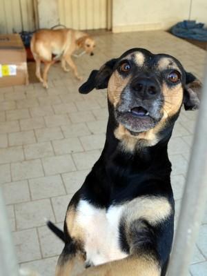Cadelas foram abandonadas há cinco meses em casa em Piracicaba (Foto: Fernanda Zanetti/G1)