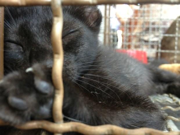 Mais de 20 gatos foram adotados por porto-velhenses neste domingo (Foto: Ivanete Damasceno/G1)
