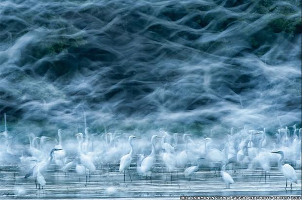 Outra imagem de natureza que recebeu menção honrosa foi a de Réka Zsirmon, feita no rio Danúbio, na Hungria.  (Foto: Réka Zsirmon/National Geographic Photo Contest 2013)