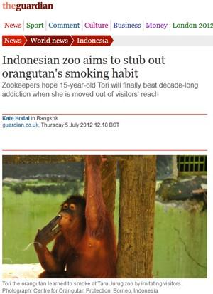 Tori, a orangotango (Foto: Reprodução)