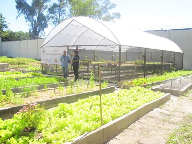 Horta e estufa onde internos poderão cultivar no Centro Dom Bosco (Foto: Alba Valéria Mendonça)