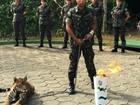 No AM, onça é abatida em zoológico do Exército após fugir e atacar militar