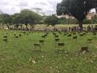 No Dia de Finados, visitantes lotam cemitérios do Vale do Aço