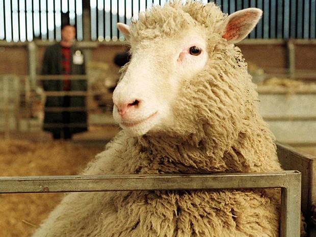 Ovelha Dolly (Foto: Paul Clements/AP)
