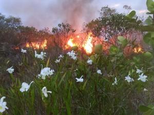 (Foto: Janio Rocha/ Brigada de Resgate Ambiental de Lençóis)