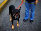 Cão 'estiloso' é clicado na Venezuela