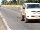 Cinegrafista flagra momento em que cobra é atropelada na BR-153