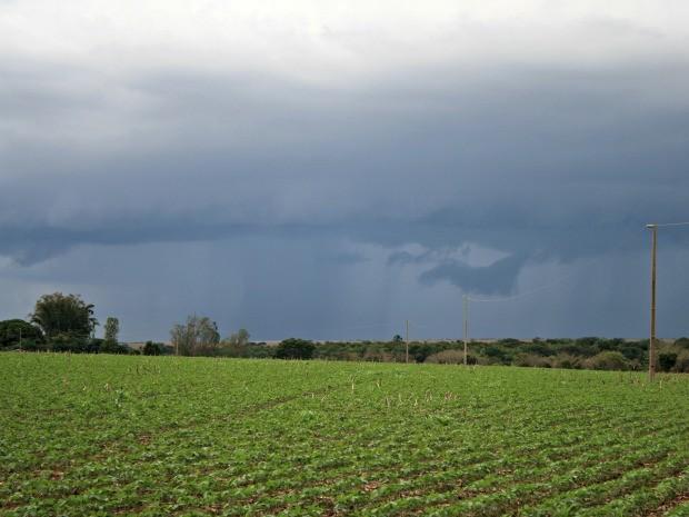 Chuva anima produtores rurais de Mato Grosso a plantarem a safra 2014/15 de soja (Foto: Amanda Sampaio/G1)