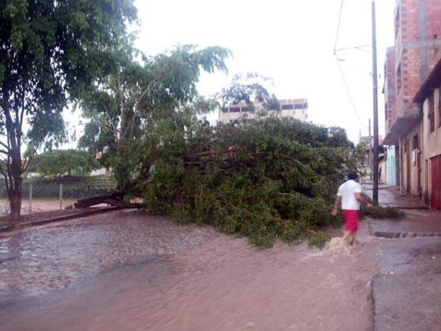 árvore caída queda Rua Amim José Barreto Bairro Belvedere 2 Divinópolis MG (Foto: Cleber Corrêa/Arquivo pessoal)