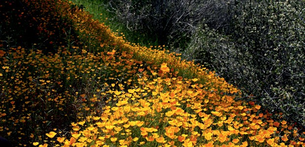 Flower Trip  (Foto: Fotos: Antonio Jotta, Corbis/Lat)