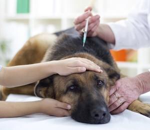 Já vacinou seu pet contra gripe?