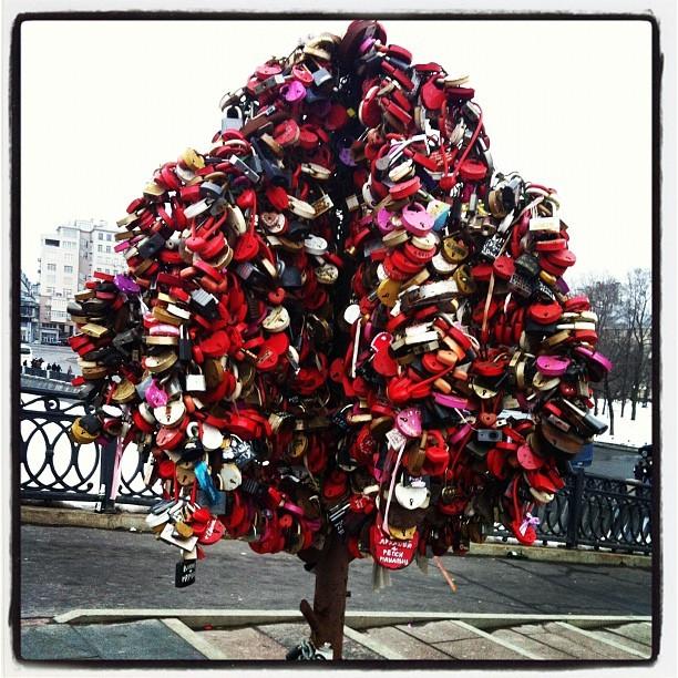 Daniela Mercury posta foto de árvore (Foto: Reprodução_Instagram)