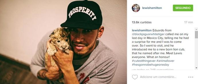 Lewis Hamilton posta foto com bebê leão que ganhou o mesmo nome que dele (Foto: Reprodução/Instagram)