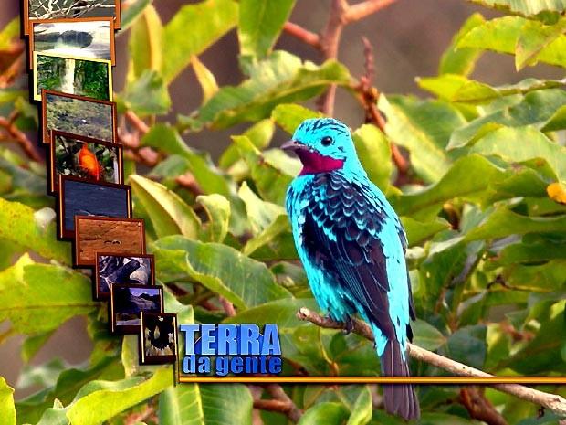 Pássaros são um dos atrativos do programa Terra da Gente deste sábado (Foto: Reprodução /Terra da Gente)