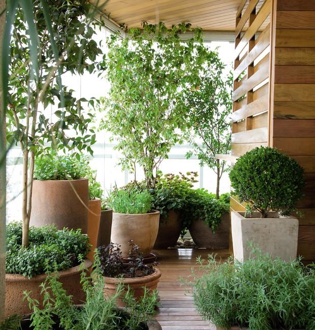 Extremamente Como cultivar frutas na varanda - Casa e Jardim | Jardim OI12