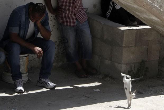 Um gato foi fotografado em uma pose curiosa nesta terça-feira (1º) após saltar de uma escada em Jenin, nos Territórios palestinos (Foto: Jaafar Ashtiyeh/AFP)
