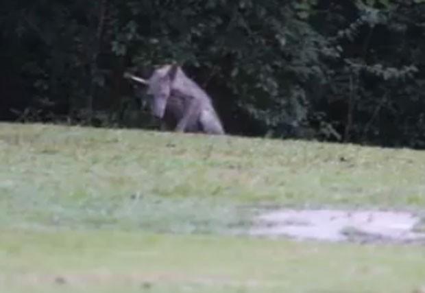 Moradores se assustaram após criatura estranha ser filmada no estado do Mississippi (Foto: Reprodução/YouTube/Ross Whitfield)