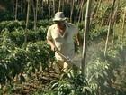72 fazendas e comércios no CE são autuados por uso ilegal de agrotóxico