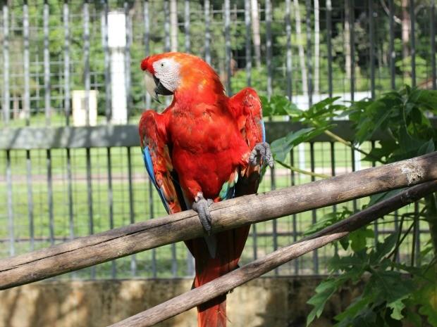Arara faz parte dos animais aptos para serem doados a zoológicos (Foto: Ivanete Damasceno/G1)