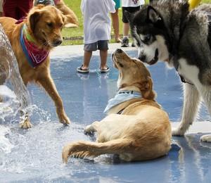 Cães brincam em parque (Foto: Skip Bolen/Getty Images)
