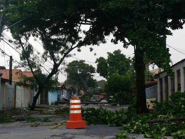 Ventos derrubaram árvores e postes em São José dos Campos (Foto: Daniel Marques/ Vanguarda Repórter)
