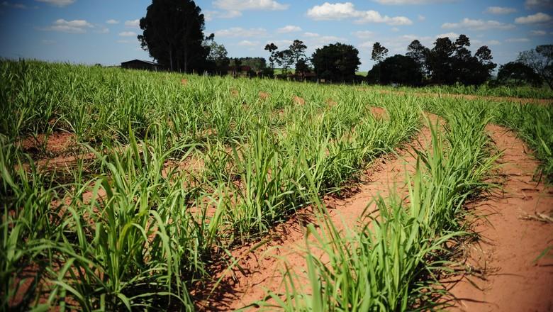 cana-etanol-biocombustivel-açúcar (Foto: Ernesto de Souza/Ed. Globo)